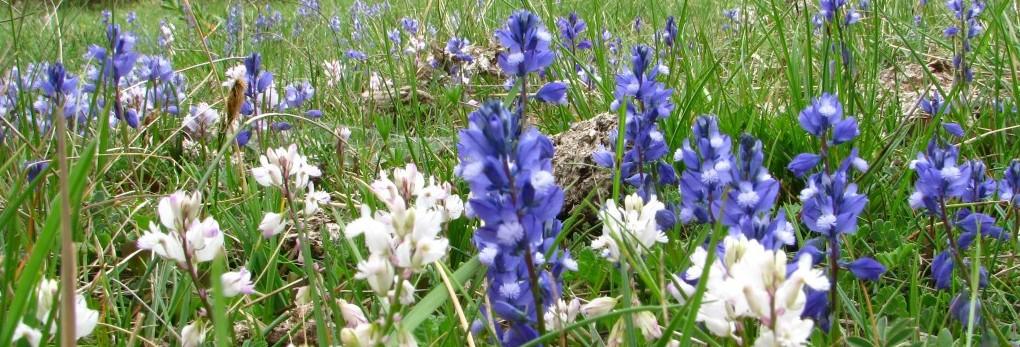 hierbas-silvestres-para-la-cocina-garrotxa-25-25-mayo-3