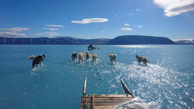 Dogs pull a sledge on water-covered ice near Qaanaaq