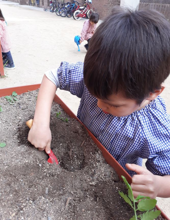 Planter P4 (2)