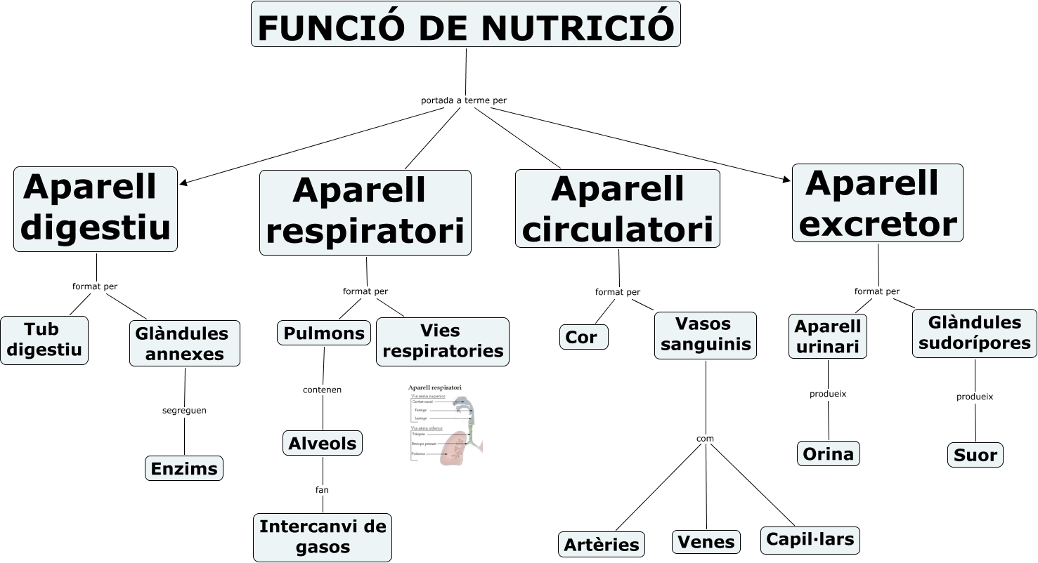 Resultado de imagen de funcio nutricio