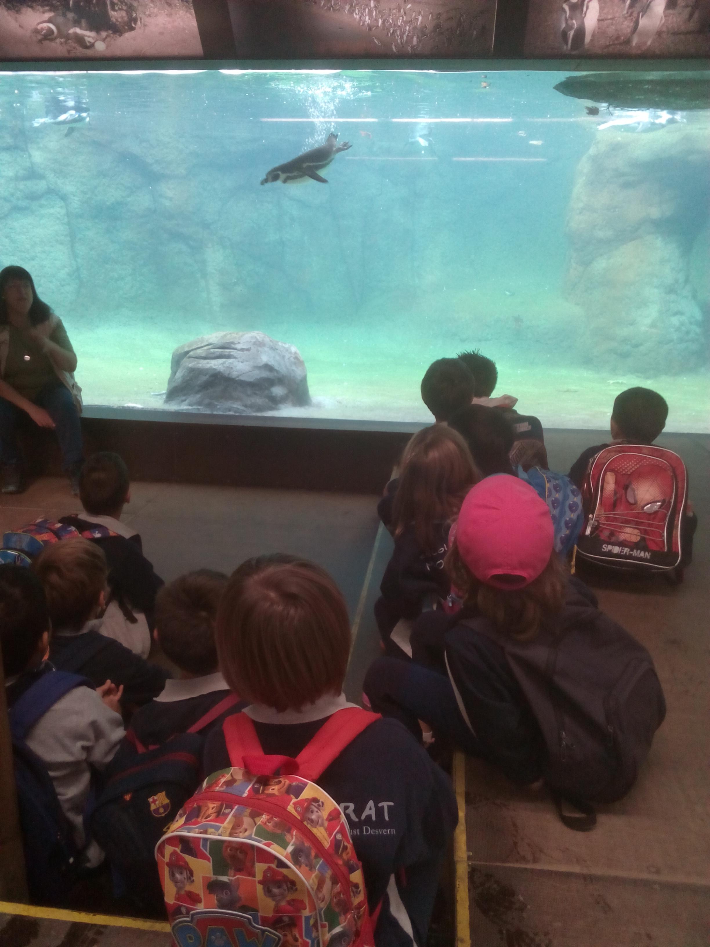 P5A i B al Zoo