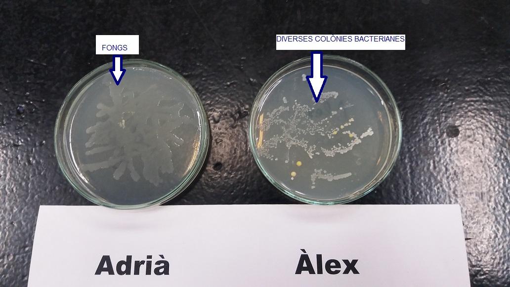 Plaques Adrià i Àlex FINAL